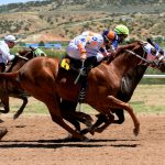 Top 8 Sports Horses for Racing